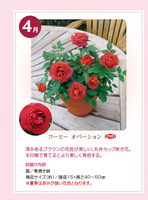 monthly_04_img01.jpg