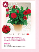 monthly_04_img06.jpg